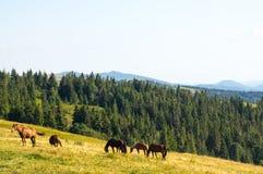 Hästar är betande i bergen Royaltyfri Fotografi