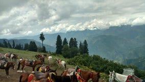 Hästar är klara att få turister till närliggande bergmaxima på paiängar arkivfoton