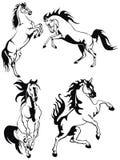 hästar Royaltyfria Foton