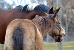 Hästar 113 Royaltyfri Fotografi
