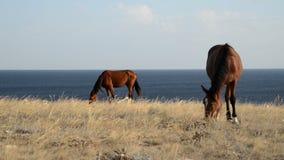 Hästar stock video