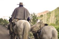 Hästar Royaltyfria Bilder