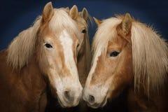 3 hästar Fotografering för Bildbyråer