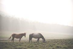 Hästar arounded dimma på den Olkhon ön bahamianen Royaltyfri Bild