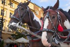Hästar av en gammalmodig cab arkivfoton