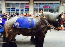 Hästar av karnevalet på eau-de-cologne Arkivfoto