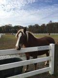Hästar betar in fotografering för bildbyråer