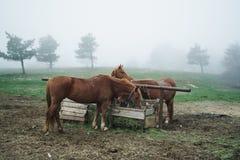 Hästar betar i bergen, naturen, boskap, djur Royaltyfri Foto