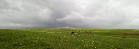 Hästar betar i en äng på en molnig dag royaltyfri fotografi