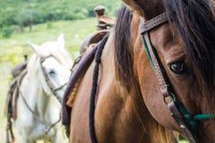 Hästar förseglade för ritt i fältet arkivbild