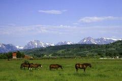 Hästar framme av berg Royaltyfri Bild
