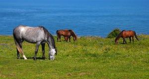 Hästar framme av havet royaltyfri fotografi