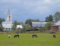 Hästar i ängen Arkivbilder