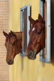 Hästar i asken Arkivfoto