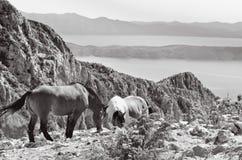 Hästar i berg Royaltyfri Bild