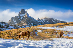 Hästar i bergen Arkivfoto
