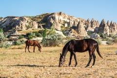 Hästar i Cappadocia Fotografering för Bildbyråer