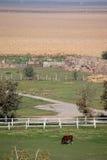 Hästar i Corral Fotografering för Bildbyråer