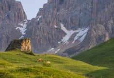 Hästar i de gröna fälten på soluppgång, Dolomites, Italien Royaltyfria Bilder