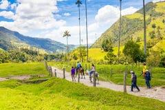 Hästar i den Cocora dalen Salento Colombia royaltyfri foto