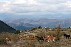 Hästar i den fria naturen, Abruzzo, Italien royaltyfri foto