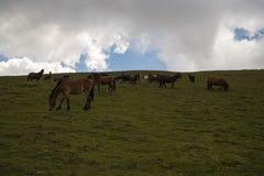 Hästar i den härliga dalen av den Kabul floden royaltyfri fotografi