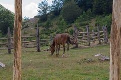 Hästar i den Mavrovo nationalparken Royaltyfria Foton
