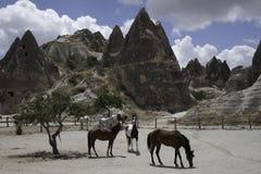 Hästar i det Capadocia landskapet i Turkiet Arkivfoton