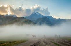 Hästar in i dimma och monteringen Kazbek på bakgrunden Royaltyfria Foton