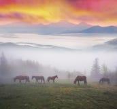 Hästar i dimman på gryning royaltyfri bild