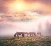 Hästar i dimman på gryning royaltyfri fotografi