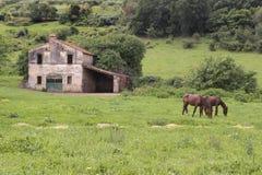 Hästar i en äng Arkivfoton