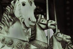 Hästar i en parkera royaltyfri fotografi