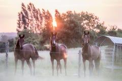 3 hästar i ett fält, Le Mans, Frankrike royaltyfria bilder