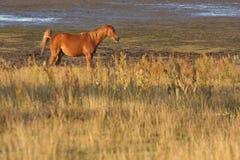 Hästar i ett fält i Sverige i sommaren arkivfoto