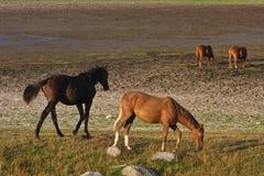 Hästar i ett fält i Sverige i sommaren royaltyfria bilder