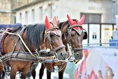 Hästar i Europa arkivbild