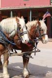 Hästar i gravsten Fotografering för Bildbyråer