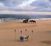 Hästar i Los Cabos Mexico arkivfoton
