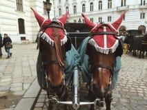 Hästar i mitten av Wien Arkivbild