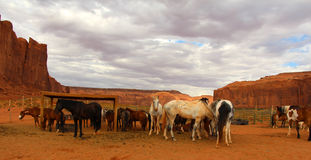 Hästar i monumentdalen Arkivbild