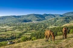 Hästar i natur Arkivbilder
