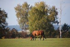 Hästar i natur på solig varm dag royaltyfri fotografi