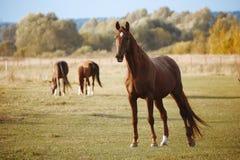 Hästar i natur på solig varm dag arkivfoton
