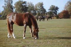 Hästar i natur på solig varm dag fotografering för bildbyråer