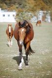 Hästar i natur på solig varm dag arkivbilder