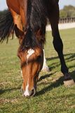 Hästar i natur på solig varm dag royaltyfri foto