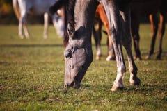 Hästar i natur på solig varm dag royaltyfria foton