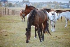Hästar i natur på solig varm dag arkivbild