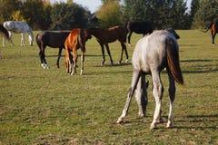 Hästar i natur på solig varm dag arkivfoto